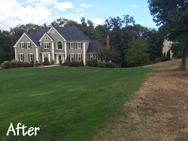 After image of lawn using Velver Green products