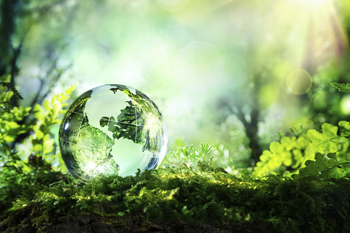 etched glass globe with green forest background