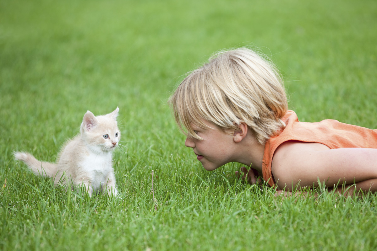boy laying in grass with kitten