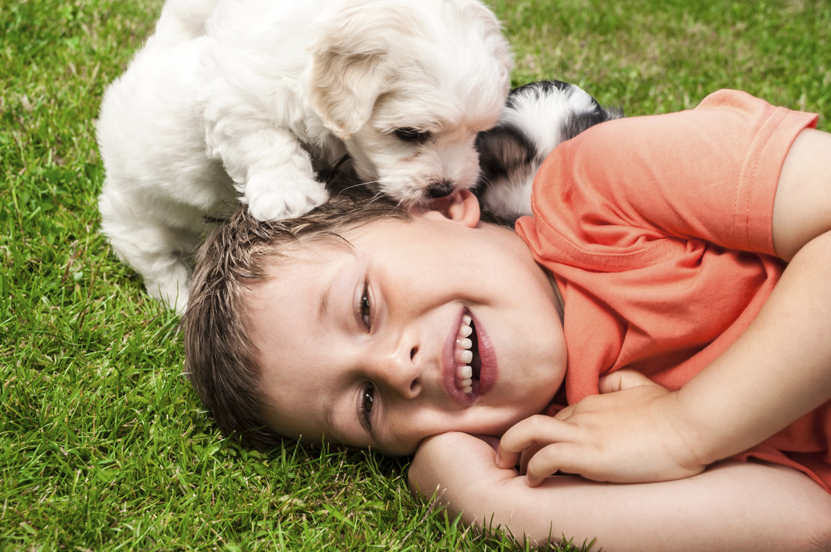 boy laying on grass, laughing while puppy climbs on him.